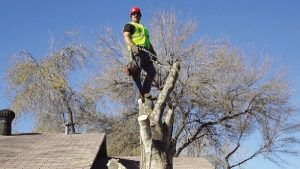 little-rock-tree-service_1.jpg