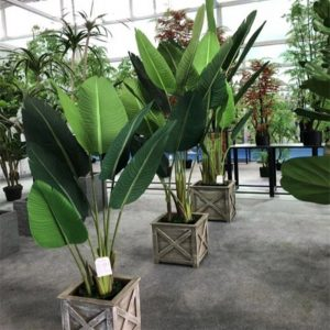 artificial-bird-s-nest-fern - 副本 (2).jpg