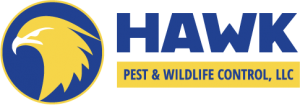hawk-web-logo-transparent-small.png