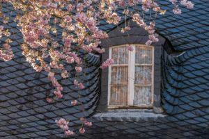 roof-in-spring.jpg