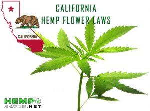 California-Hemp-Flower-Laws-544x400.jpg