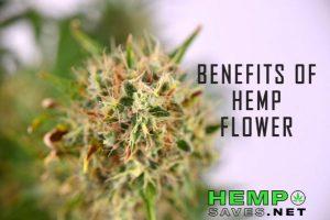 Hemp-Flower-Benefits-1-599x400.jpg
