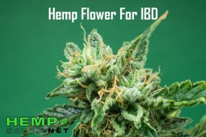hemp-flower-for-ibd-600x400.jpg