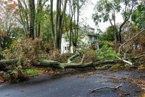 24 hour emergency tree service rochester ny.jpg